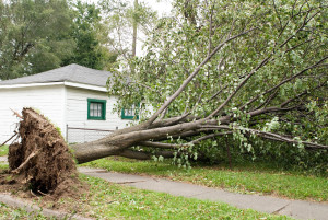 Preparing for windstorms can save lives and property